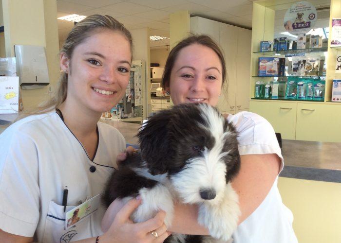 Clinique vétérinaire Dijon Talant