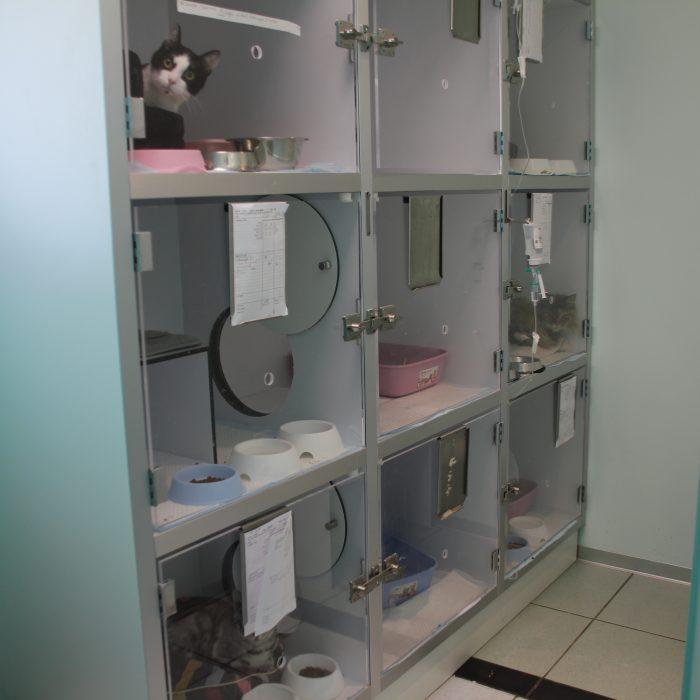 Clinique vétérinaire Les Clomiers